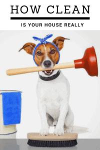 dog biting a toilet pump